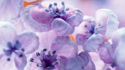 Flowers and Gardens HQ wallpapers Collection 1 32ba9c108224325