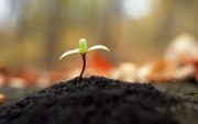 Green Plants Birth HD Wallpapers Fcb3ec108975167