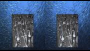 Дикий океан 3D / Wild Ocean 3D